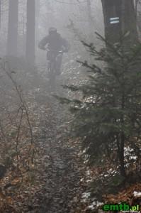 Błotny singiel we mgle.