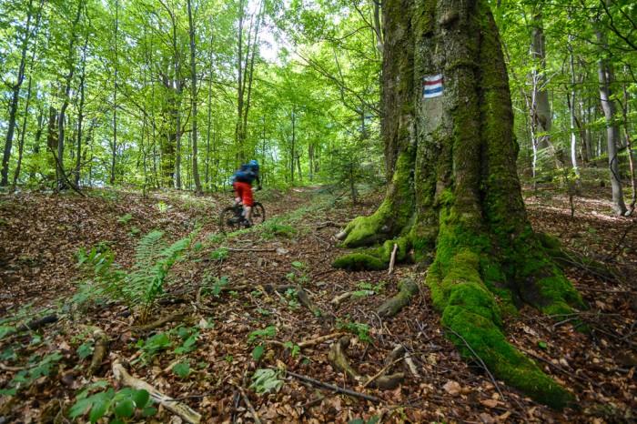 path finder 8